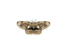 【森林之寶】阿里山國家森林遊樂區巨木群步道-枯球籮紋蛾