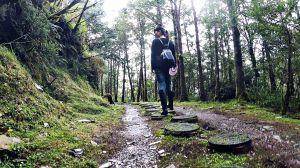 山毛櫸步道