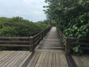 新豐紅樹林生態保護區