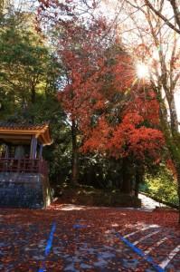 阿里山紅葉