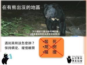 【戶外百科】遇到熊該怎麼辦?