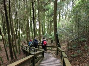 觀霧檜山巨木步道森呼吸