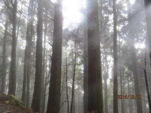 雨霧濛濛之特富野步道