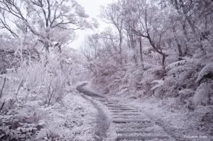 姜子寮山-紅外線攝影