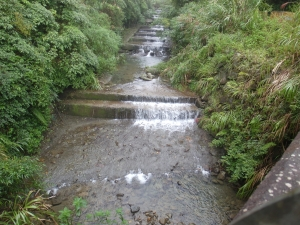 南投鹿谷溪頭自然教育園區