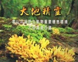 【書訊】大地精靈:雪山坑溪野生動物重要棲息環境大型真菌百選