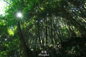 觀霧森林遊樂區