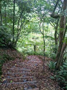 坪林水柳腳步道