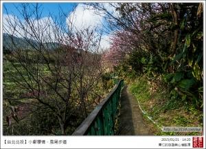 20150121小獻櫻情.風尾步道