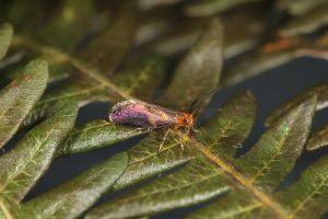 【新聞】研究87年!浸水營古道 首見侏羅紀「小翅蛾」