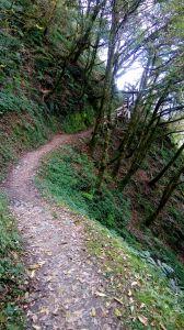檜山巨木森林步道 2017.01.07