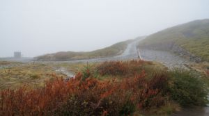 陰雨下的合歡山主峰別有風味