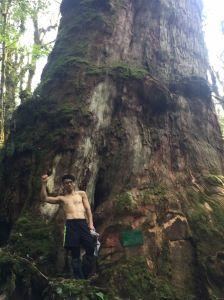 米羅山之木