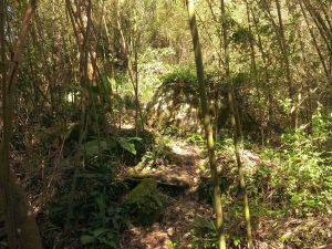 猿山步道-依循先人的蹤跡