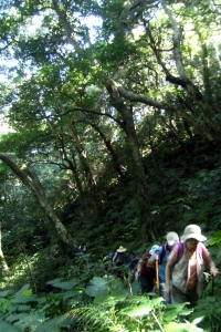 104-07-25 白紗瀑布、赫威神木群