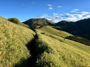 奇萊南華一睹金黃色草原