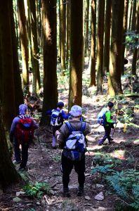 會呼吸的森林步道....加里山