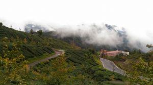 頂石棹步道群-霞之道,櫻之道及雲之道