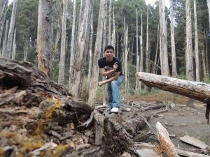 忘憂森林PLUS銀杏森林之旅