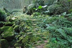 【嘉義】山峰環列守平安—四大天王山步道