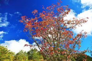塔塔加的生態,飛羽,獼猴,變色葉...