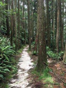 橫嶺山步道