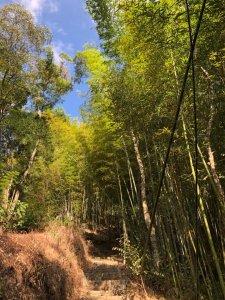東碧山莊走木馬古道、五元二角、雲嶺之丘