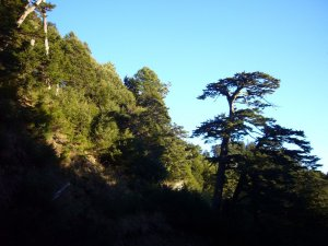 台中和平-730林道