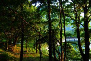 【走在台灣的脊樑上】奧萬大─彩色森林