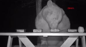 【新聞】愛偷吃蜂蜜嗎?農夫讓熊熊擔任蜂蜜試吃專家!