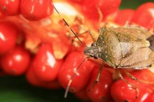 【昆蟲】森林裡的轟趴