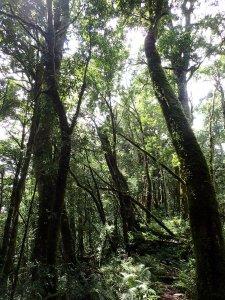 宜蘭南山部落,米羅山-南山神木群-佐得寒山縱走