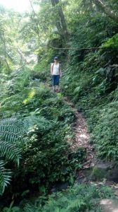 峰頭尖叢林探險記