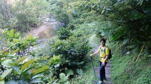 金瓜寮溪蕨類步道