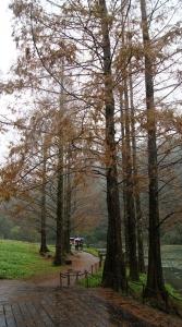 福山植物園和藍腹鷳的約會
