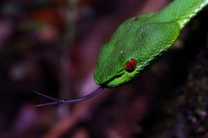 【動物】你所不知道的毒蛇真面目