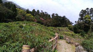 群山環抱竹子湖