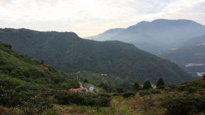 南投 高峰山 有機段木菇農場