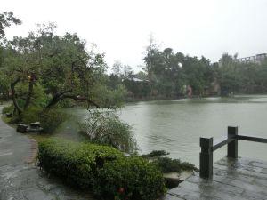 台大椰林步道.醉月湖