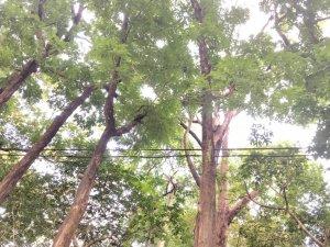 美濃雙溪樹木園-新威森林公園踏青賞鳥