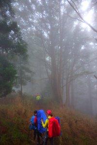 夢幻迷霧..水漾森林