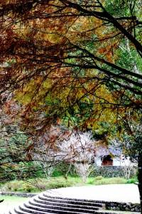 明池棲蘭神木生態之旅