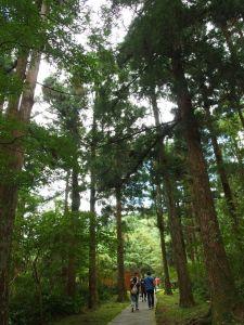 東眼山森林浴