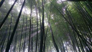 光影舞竹林,相逢石壁山