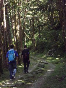 20170820太平山台灣山毛櫸步道