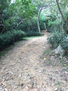 羊稠步道森林步道