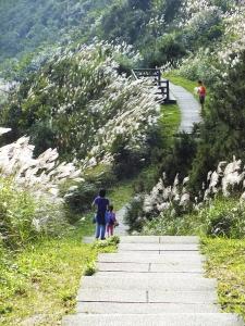 步道小旅行-賞芒聖地五分山