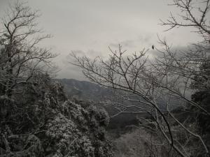 大山背雪見
