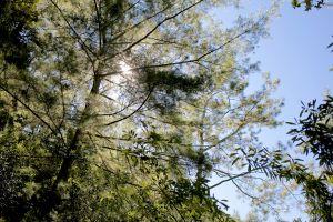 新山馬崙山:被忽略的樹