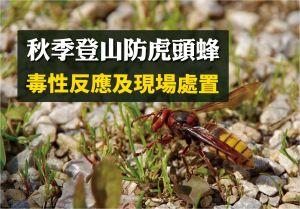 【登山醫學】虎頭蜂